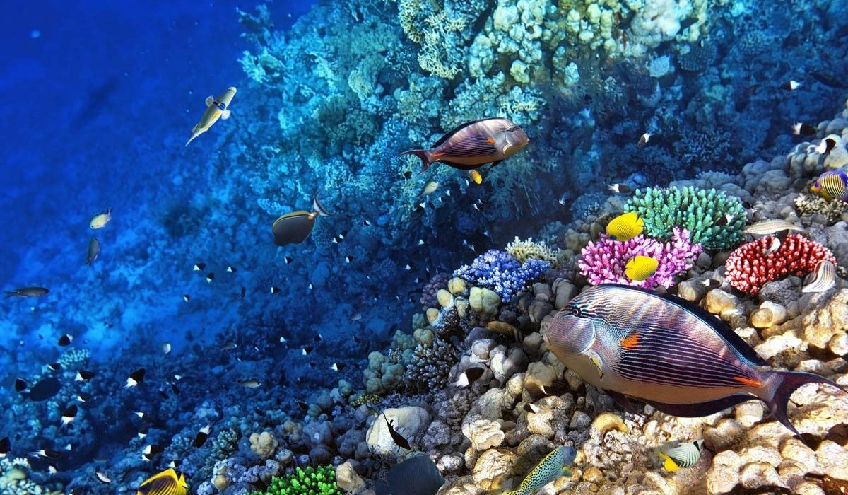 56 Billion Reasons to Value The Great Barrier Reef 1