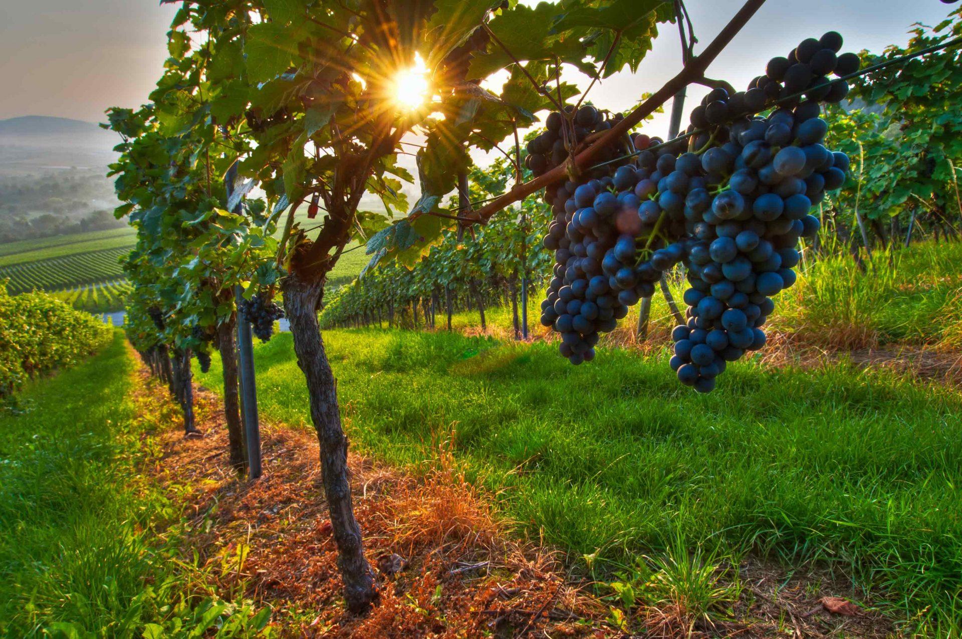 Digital Vineyards