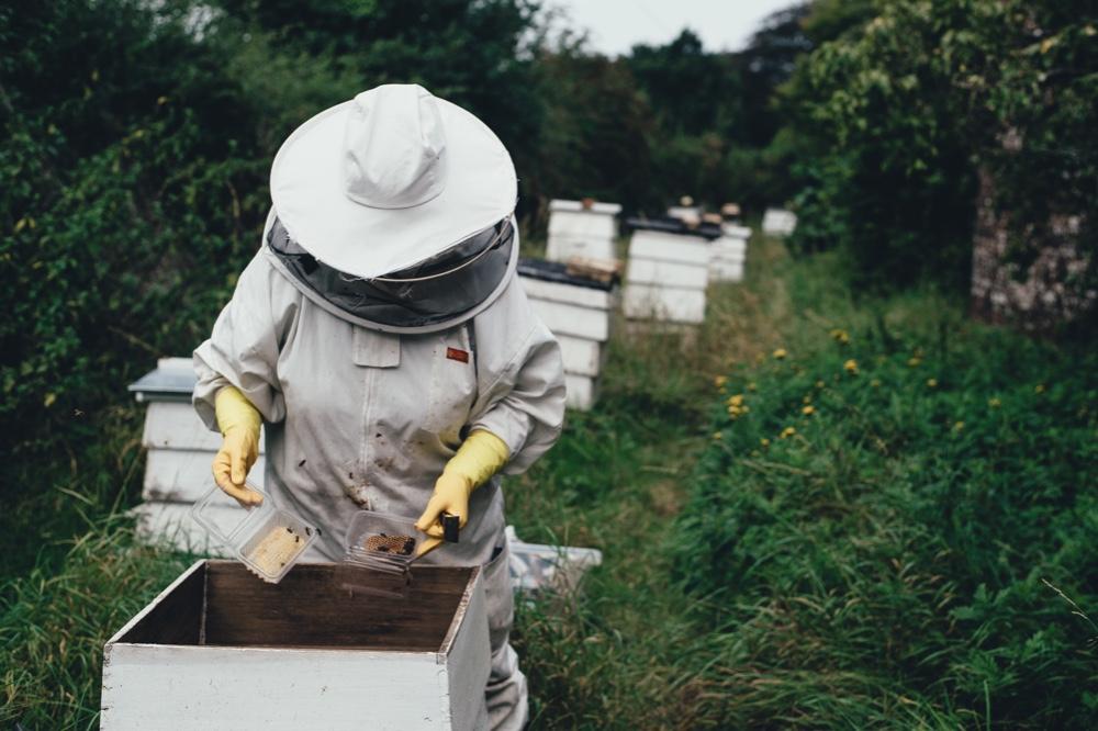 burt's bees brands