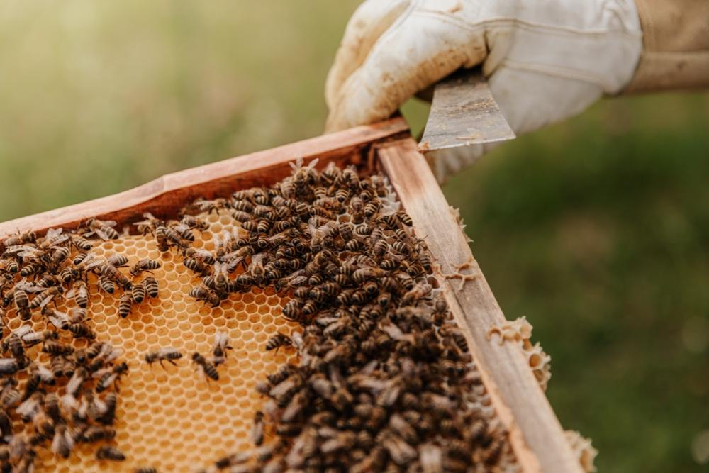 burt's bees brand