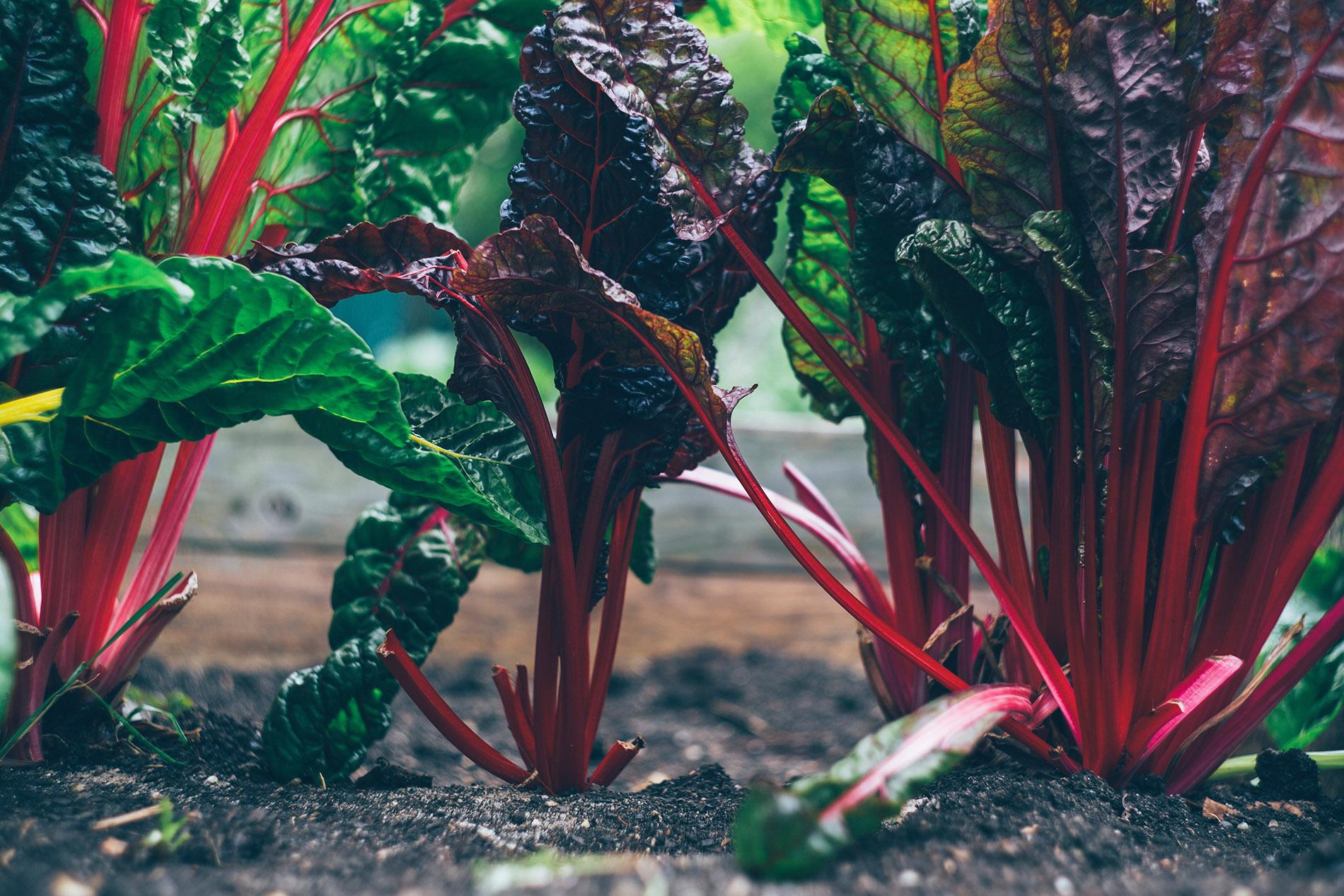 organic-farming-australia